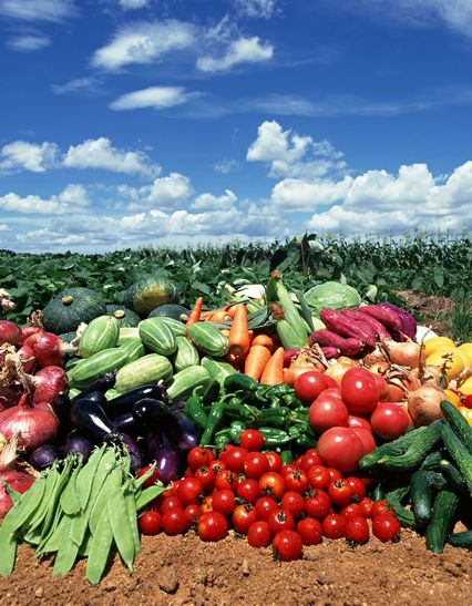 Thanh Phong trấn có Triệu cô nhi chuyên trồng rau